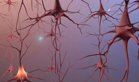 Una Investigación Revoluciona 60 años de Concepciones de la Neurociencia.